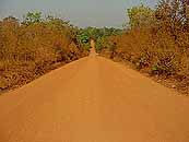 Road through Cameroon
